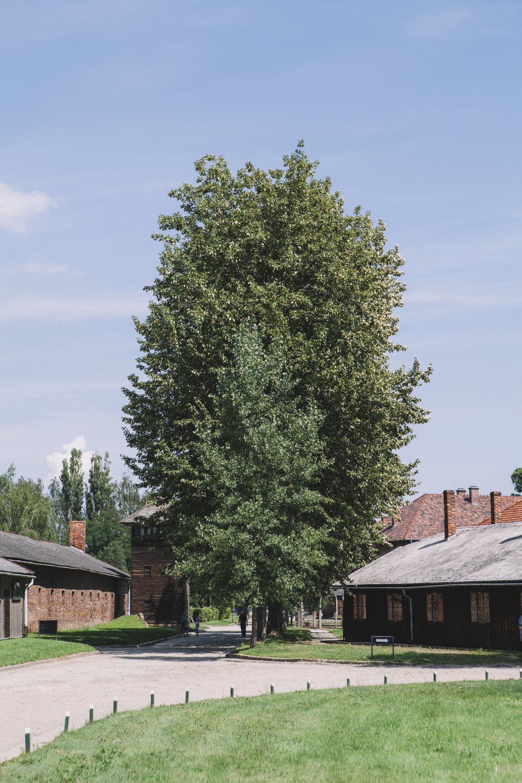 Auschwitz-Birkenau_9330.jpg