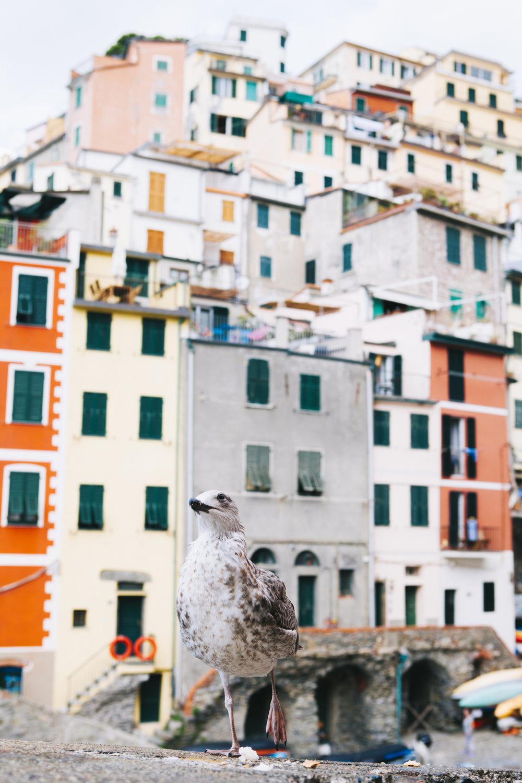 Riomaggiore_2043.jpg