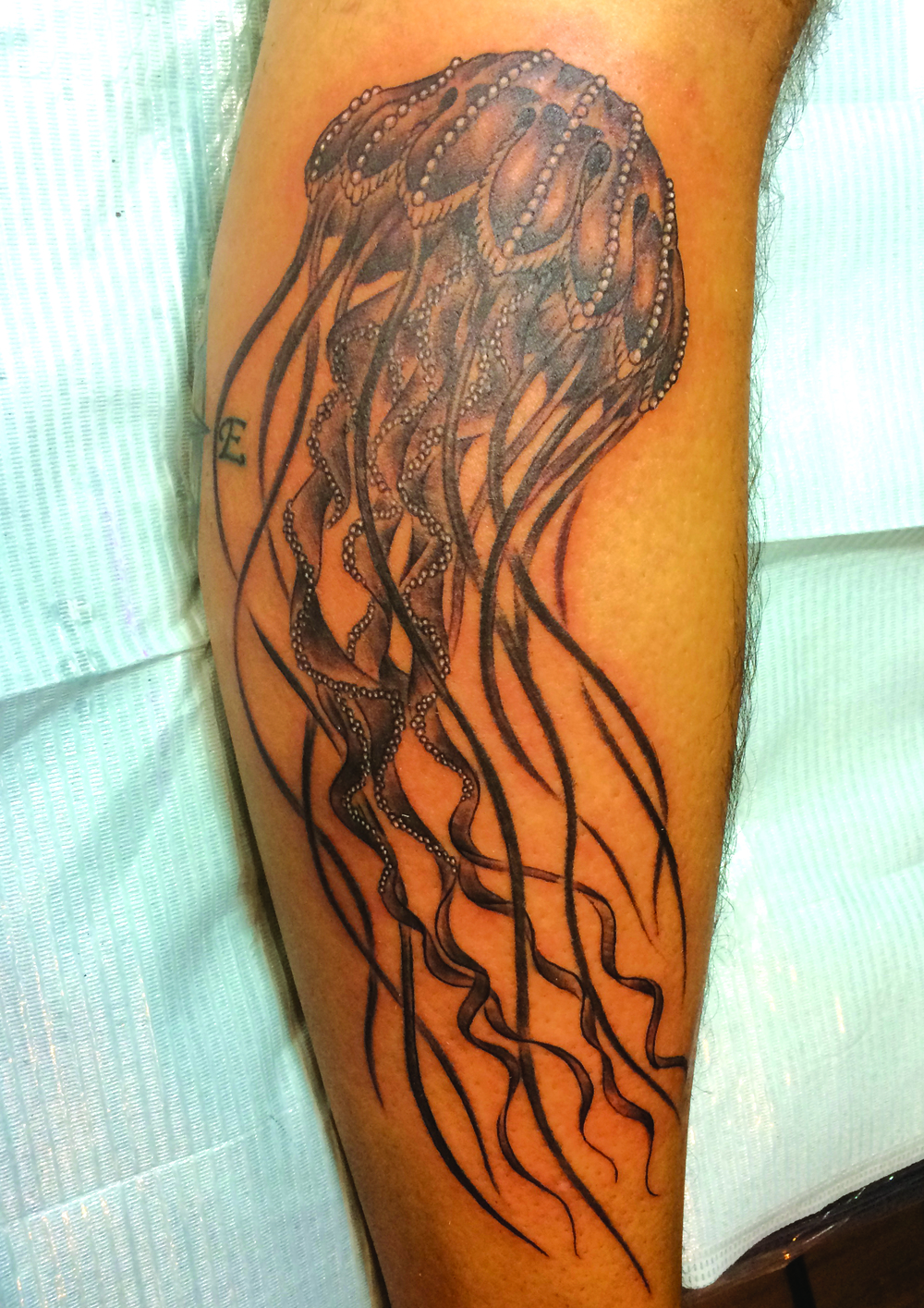 jelly fish on calf.jpg