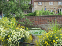 Abingdon-flowers