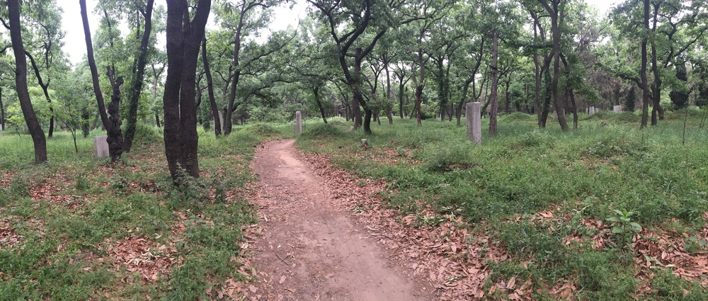 A path through the cemetery. I grew up next to a cemetery and I've always loved them.