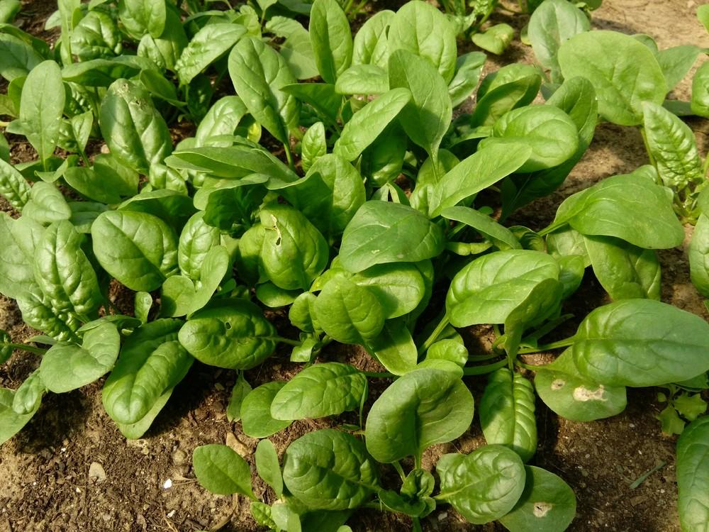 Mmm, spinach