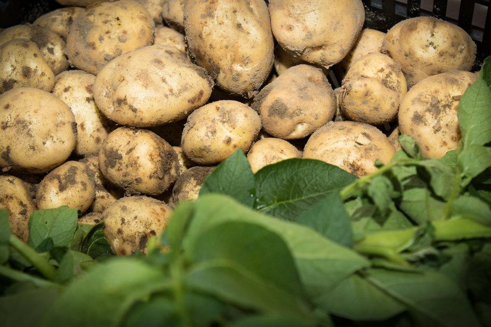 Maatilatori_avajaiset-0035.jpg