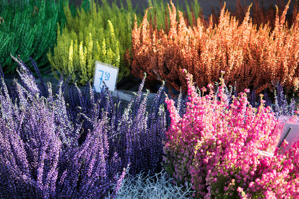 Kukkakaupan-kukat-web.jpg