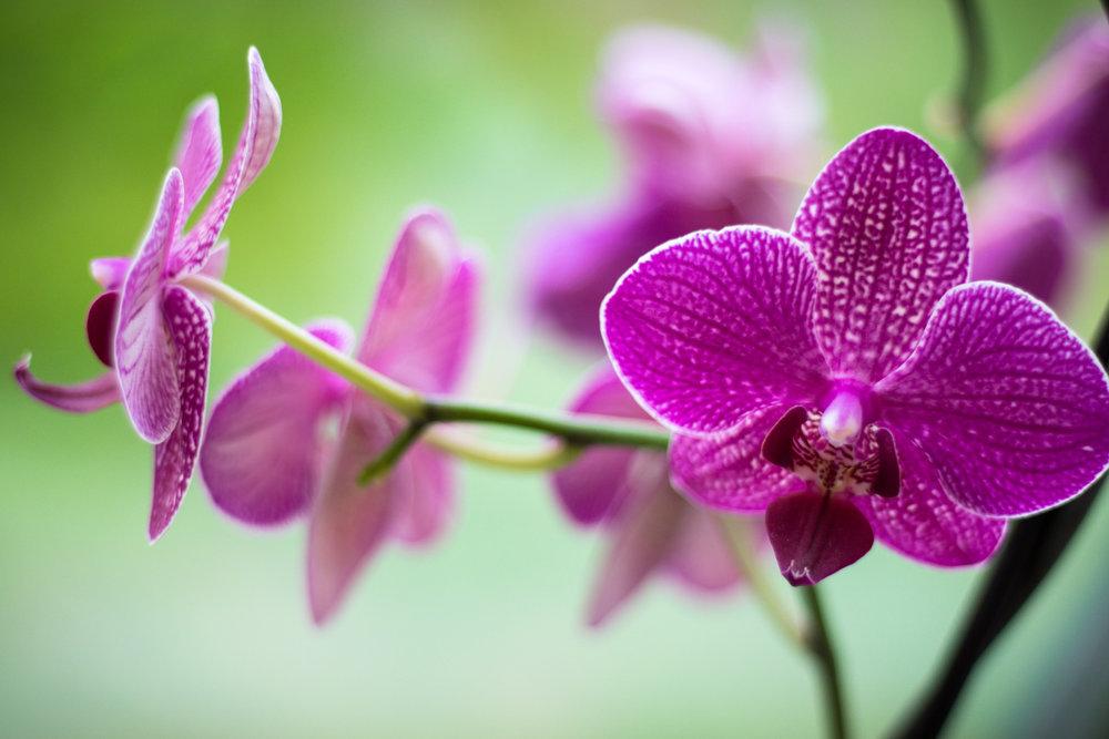 Orkideat.jpg