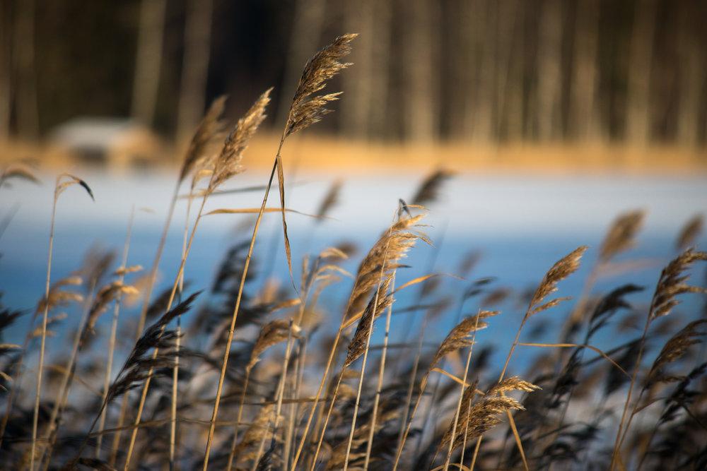 Talvista_Savitaipaletta-30.jpg