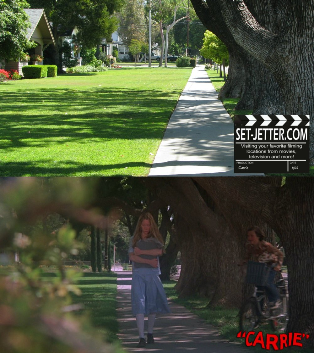 Carrie trees 02.jpg