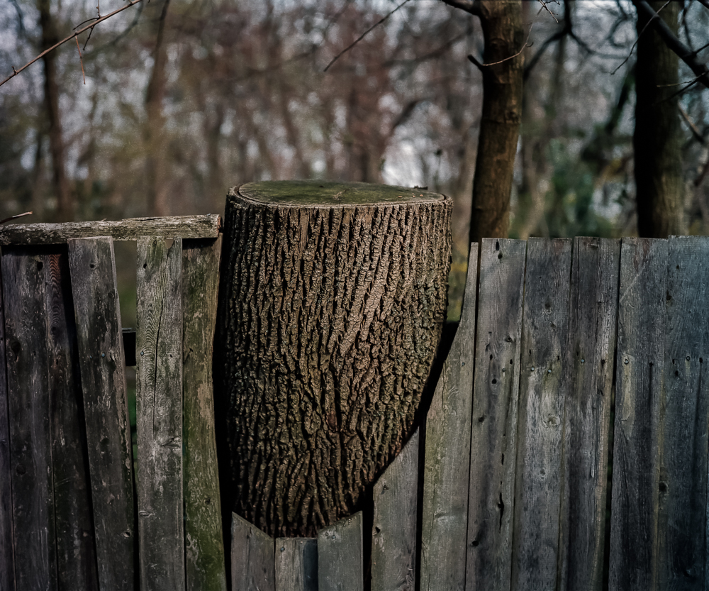Chopped Tree, 2001