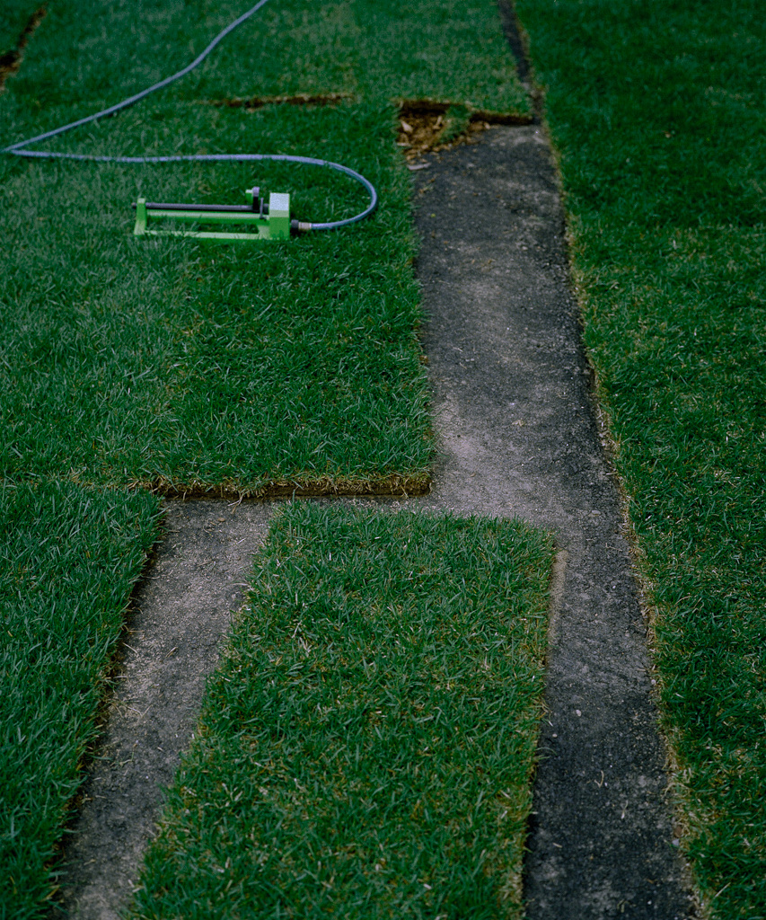 Grass over Asphalt, 2002