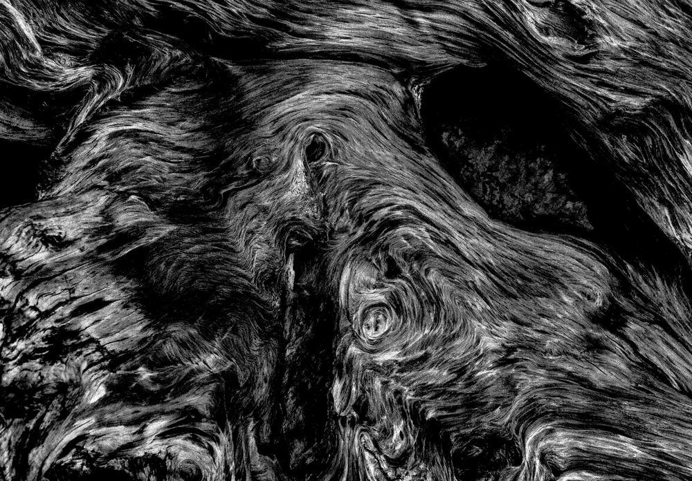 Bristlecone Spirit (2016)
