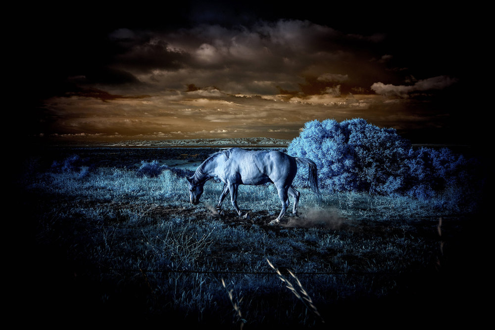 THIRD PLACE  - Robert Zucker |A Dark Horse |29x35