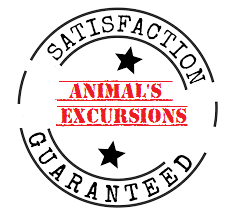 Animal's Excursions