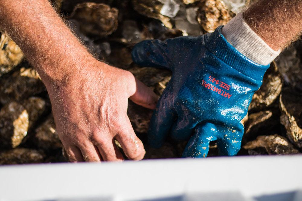 Oyster Fest-24.jpg