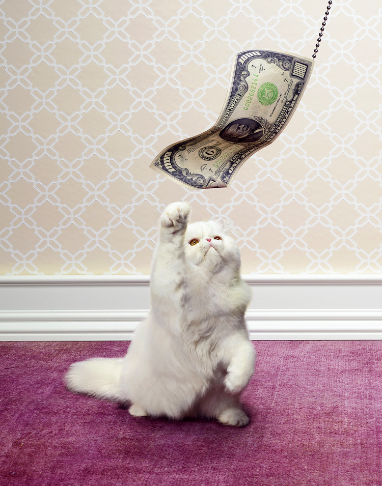 Money_kitten final web.jpg
