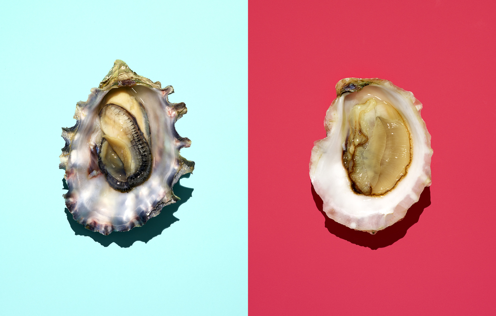 oyster diptych color final.jpg