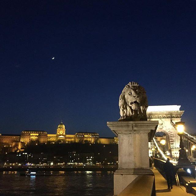 Guarding the moon  #lanchid #chainbridge #budapest #moon #moonlight #nightsky #nightskyphotography #hungary #budacastle #skyline #budapestskyline #lion #statue  #bridge