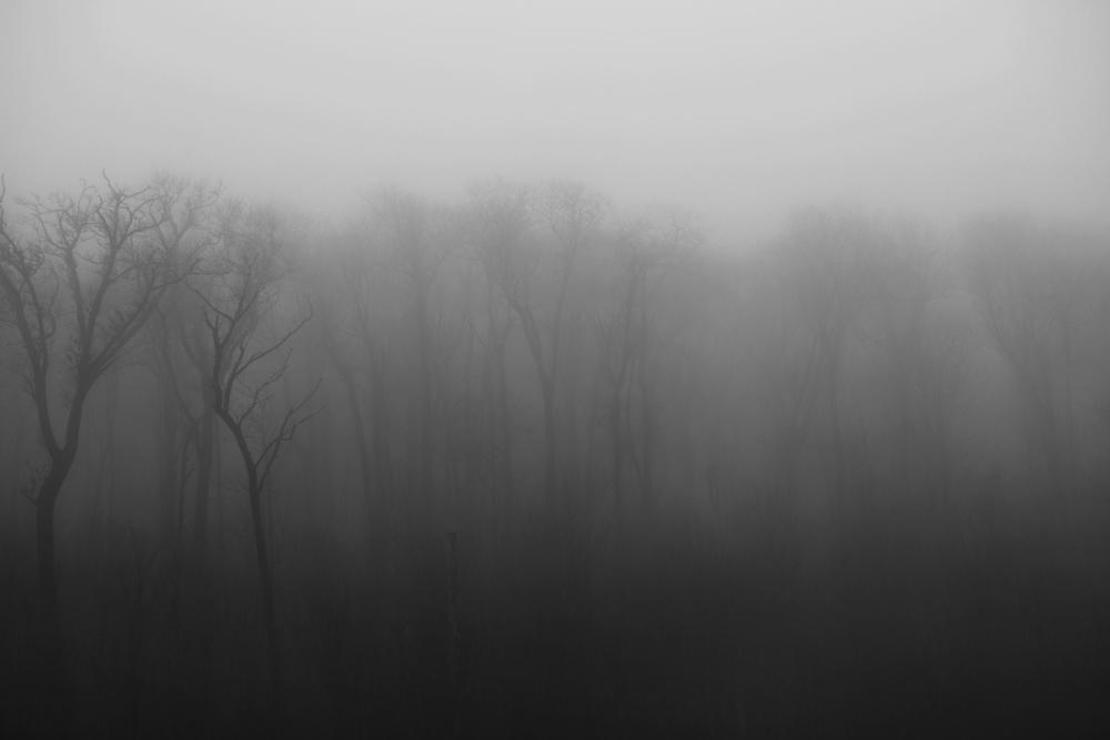 FogTrees1.jpg