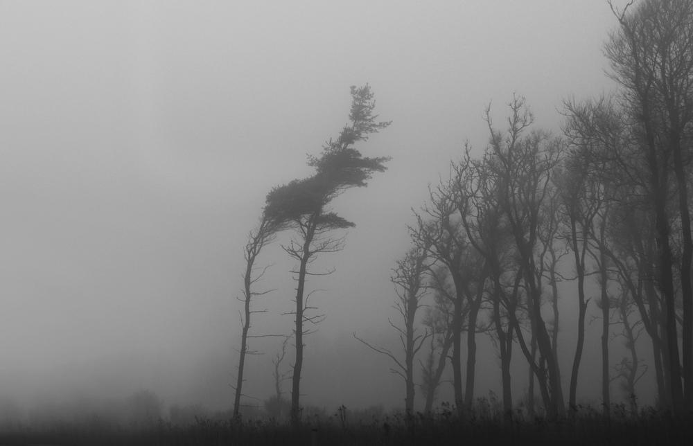 FogTrees4.jpg