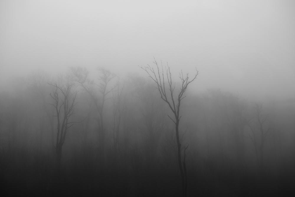 FogTrees3.jpg