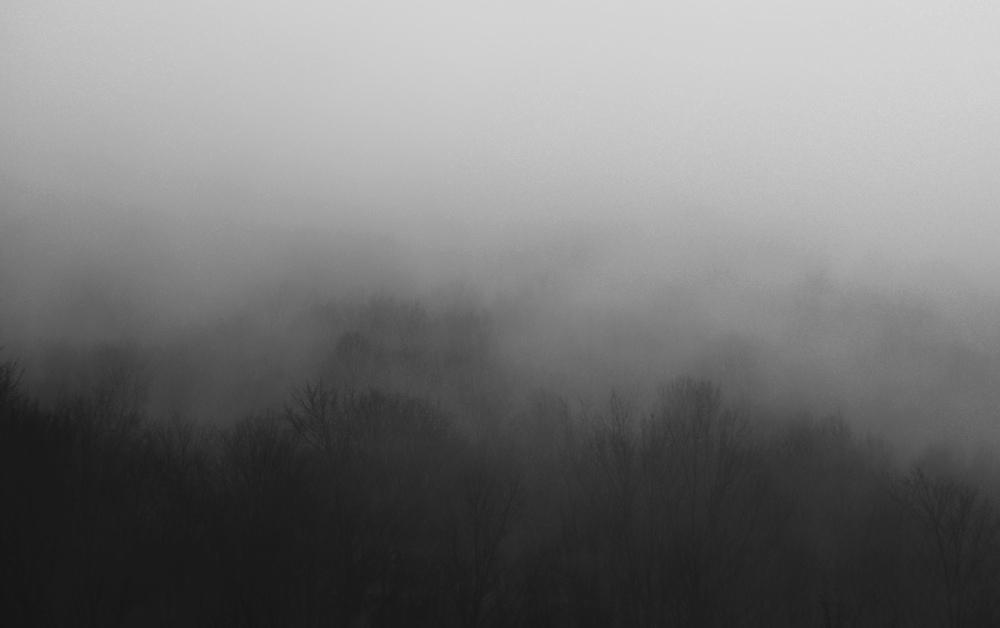 FogTrees7.jpg