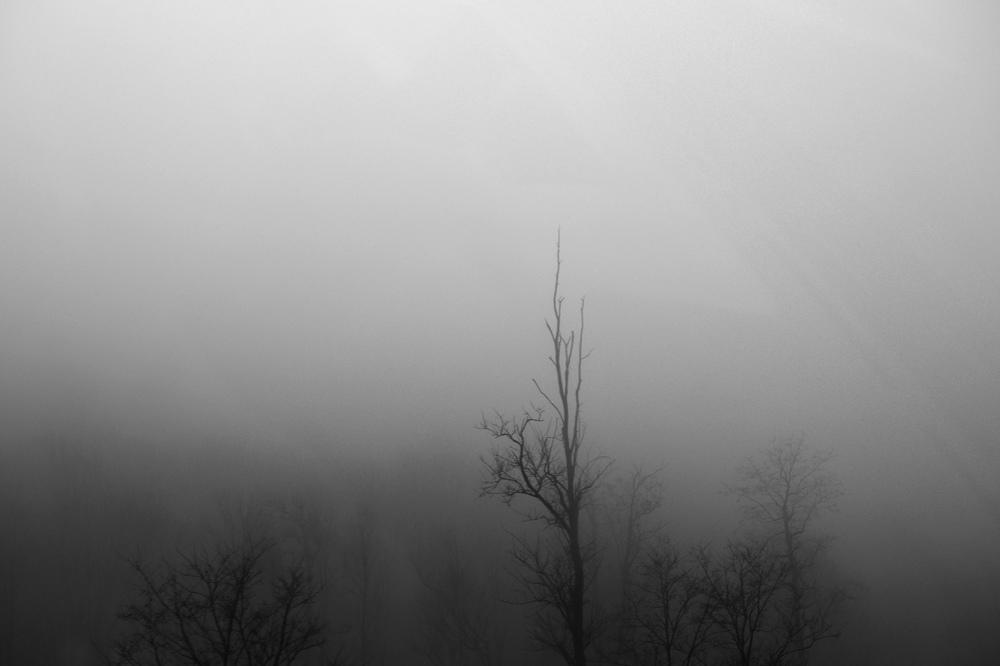 FogTrees6.jpg