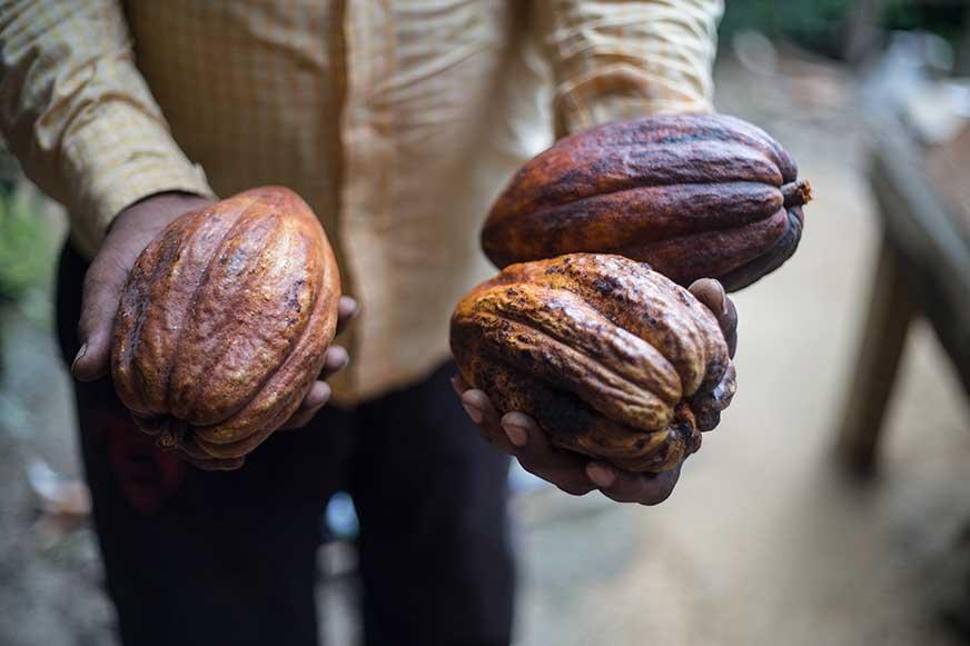 cacao_Monte_Cristo_Fototrails.jpg
