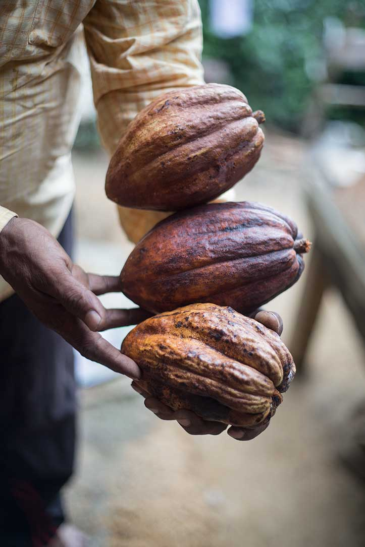 cacao_Plant_Minca_photo_tours.jpg