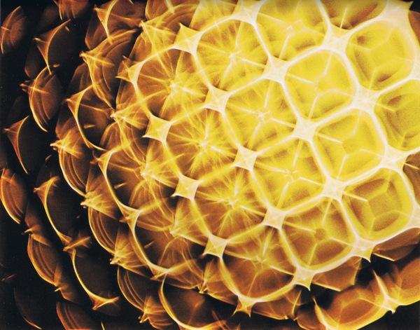 godfatherofsol: Hans Jenny& Cymatics