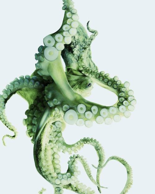 exercicedestyle :     octopus