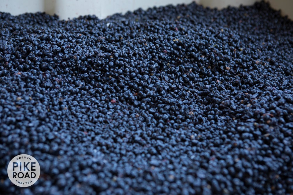 Whole Pinot Noir berries ready for fermentation