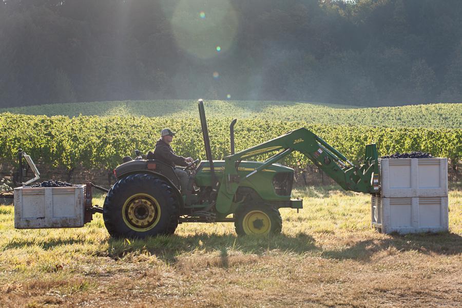 Meet Our Farmers - Oregon Farmed Grapevines
