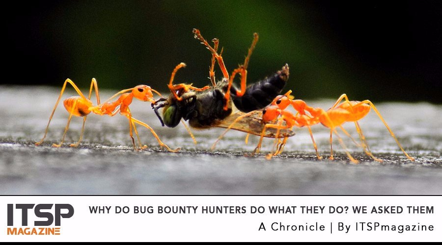 Why do bug bounty hunters do what they do- We asked them.jpg