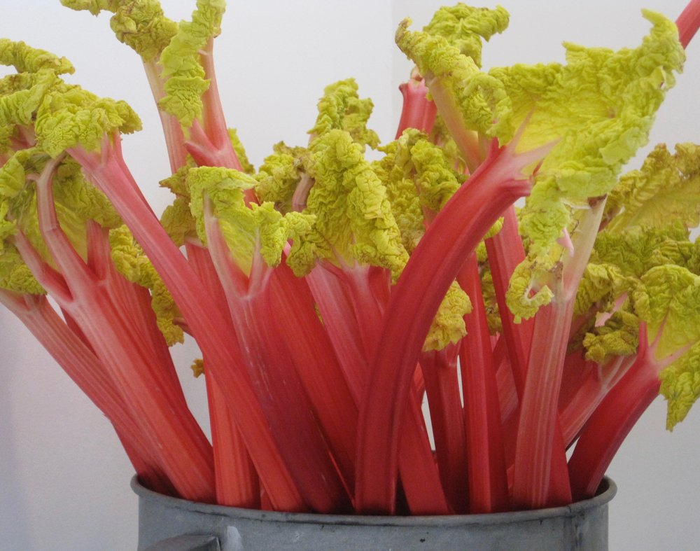 Yorkshire Triangle rhubarb