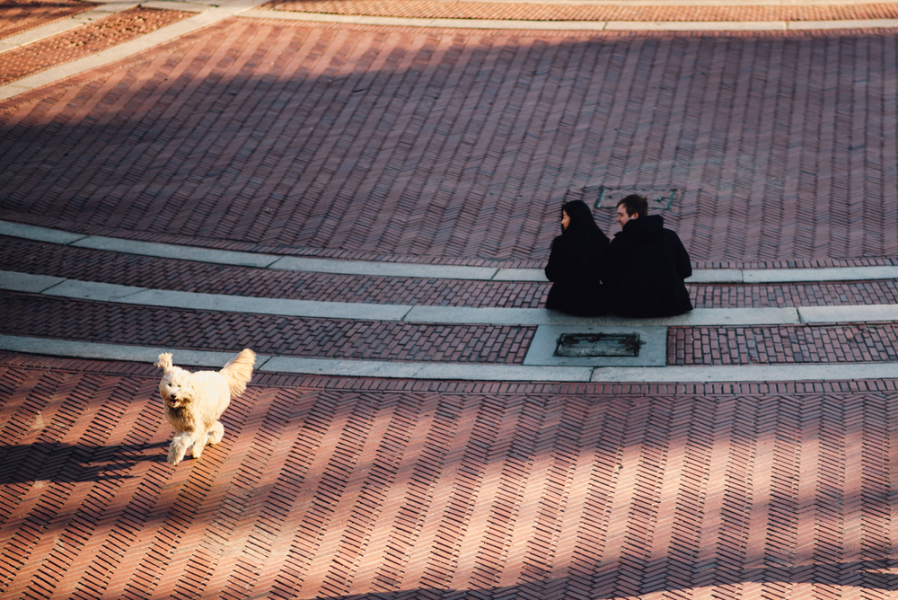 Main and Simple Photography_2016_Engagement_NY_T+S-62.jpg