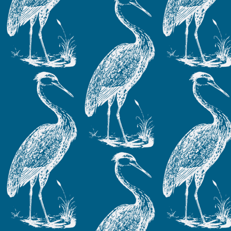 blue heron, summer blue