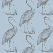 blue heron, sky