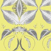nutmegMod, citrine