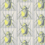 stag beetle, citrine