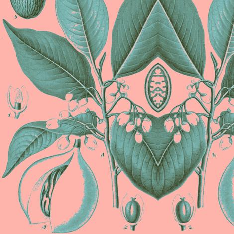 nutmeg, pink