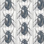 stag beetle, grey
