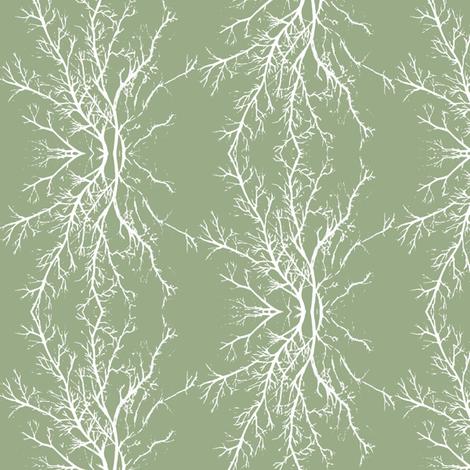 coral branchy, sage