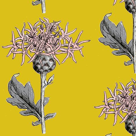 thistle sprig, saffron