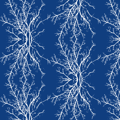 coral branchy, sapphire