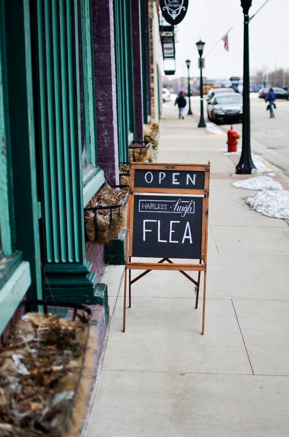 flea2.jpg