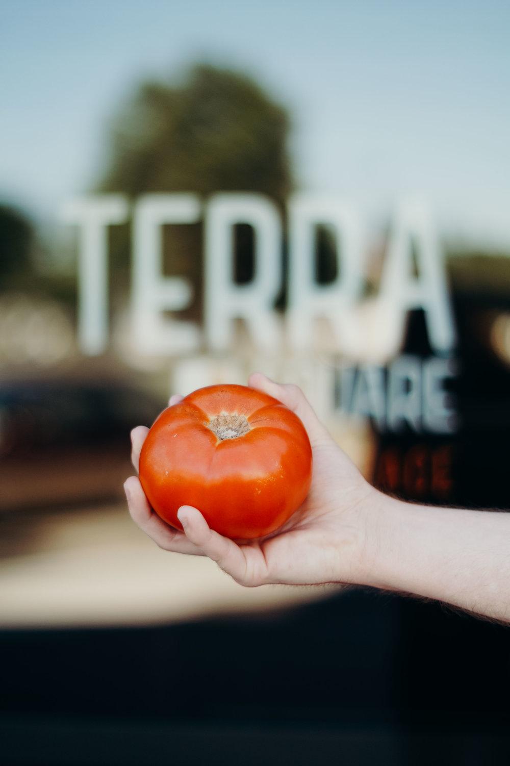 Wendling_Boyd_Terra_Square_Farmers_Market-6.jpg