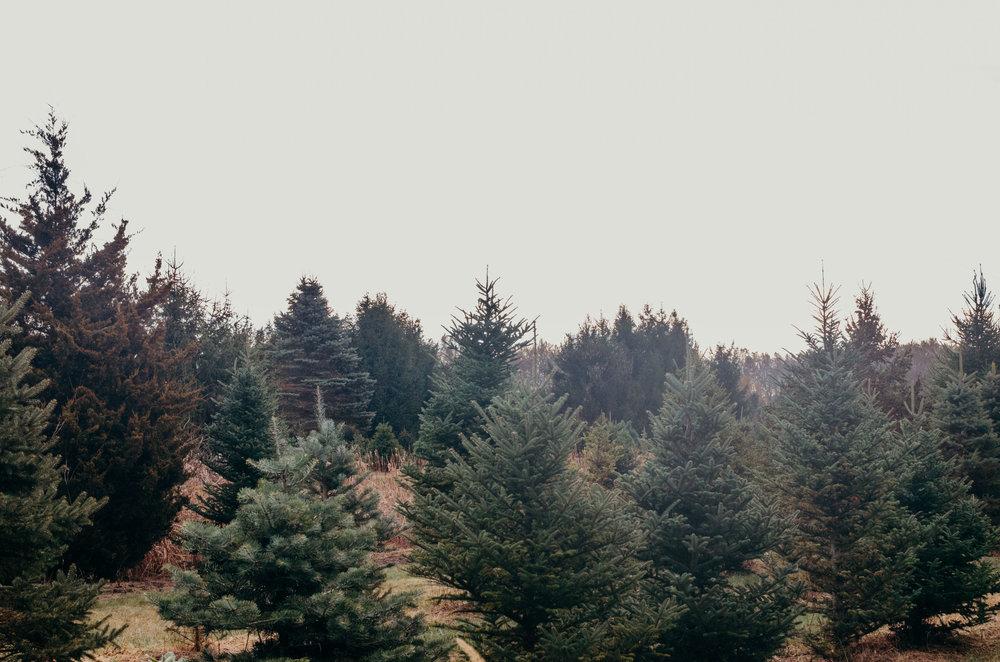 Wendling_Boyd_Tree_Hunt_2017-16.jpg