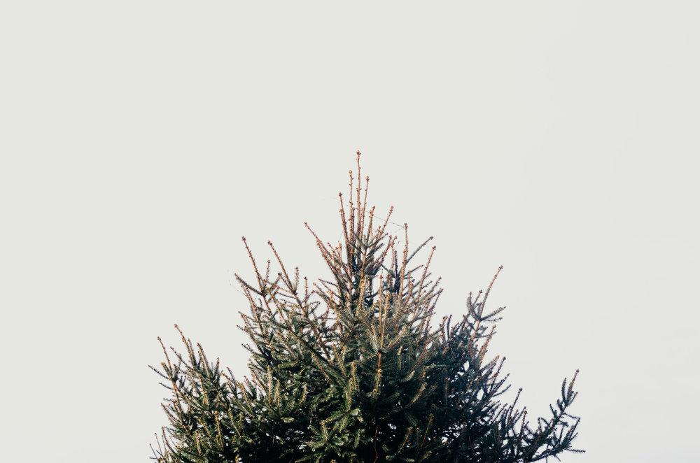 Wendling_Boyd_Tree_Hunt_2017-11.jpg