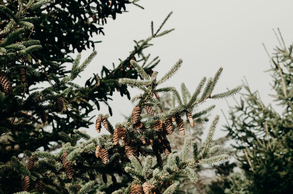 Wendling_Boyd_Tree_Hunt_2017-9.jpg