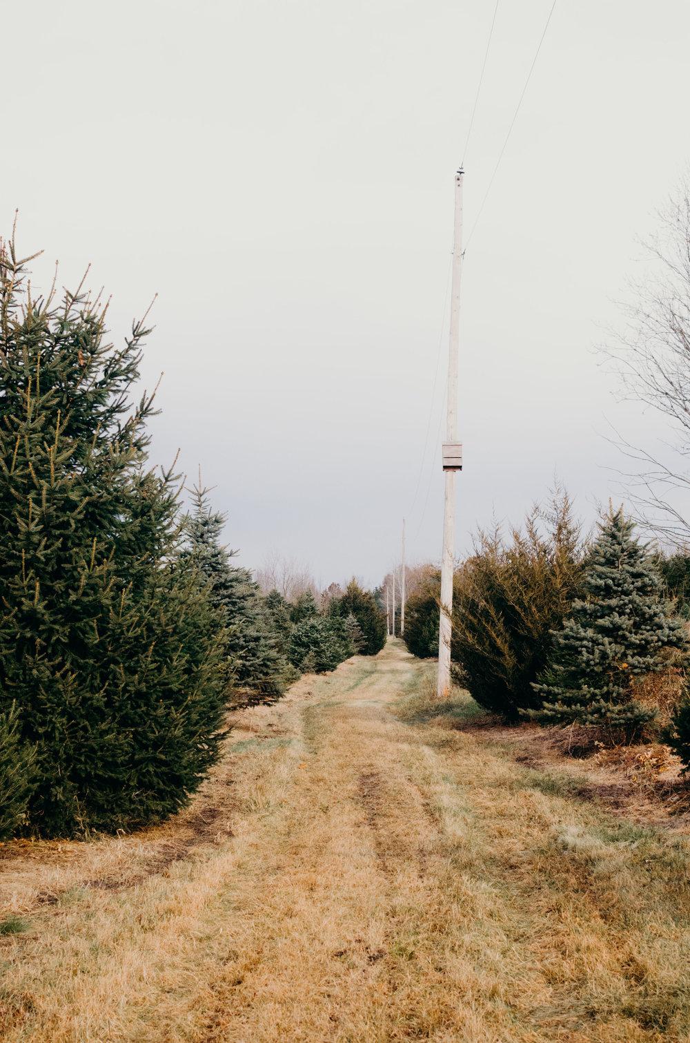 Wendling_Boyd_Tree_Hunt_2017-4.jpg