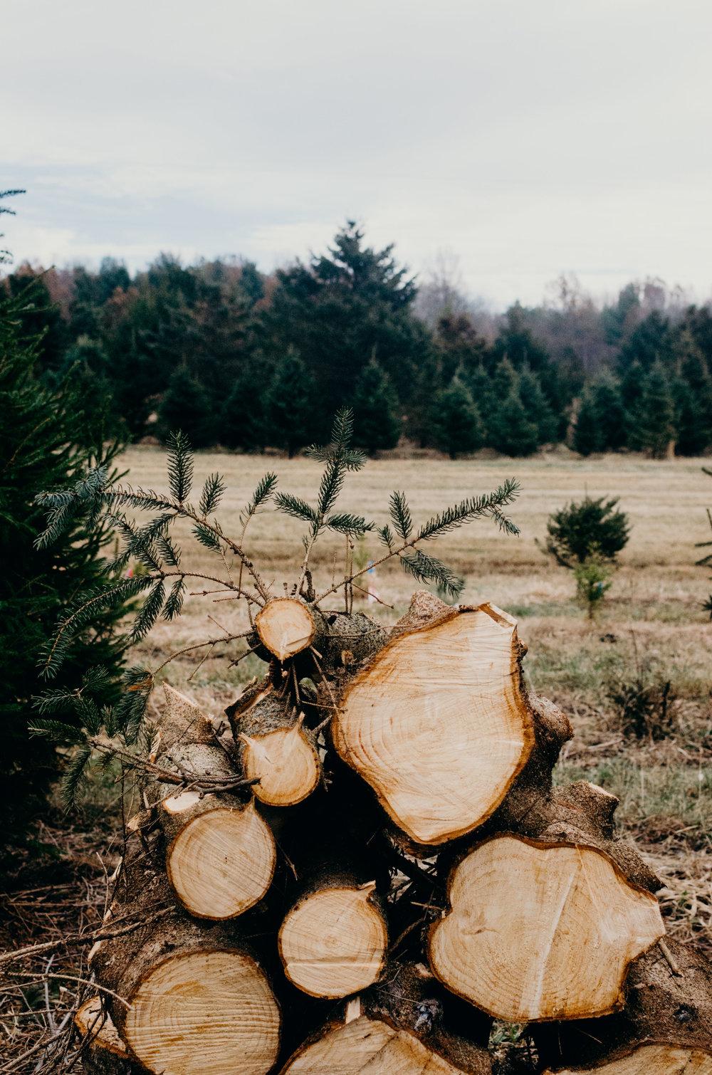 Wendling_Boyd_Tree_Hunt_2017-2.jpg